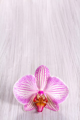 Pink orchid on wooden background