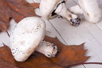 Still life of mushrooms and raw mushrooms