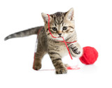 kitten playing red clew isolated on white - 60031363