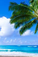 Palm leaves over ocean in Hawaii