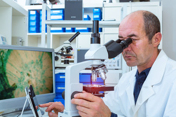 scientist examines biopsy samples