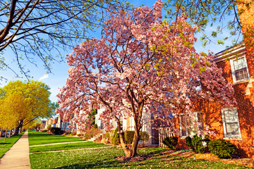 Spring in suburbs