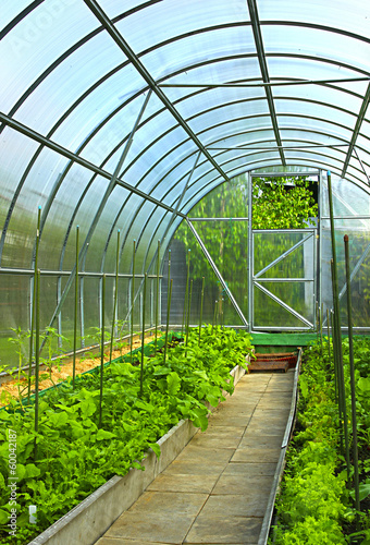 Vegetables in greenhouse