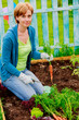 Gardening - woman and organically grown carrots