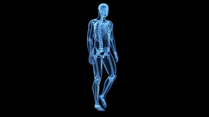 Medical animation of a walking guy - visible bones
