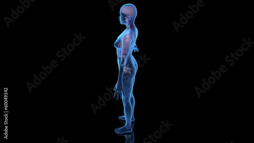 Continuous loop rotation of female anatomy model