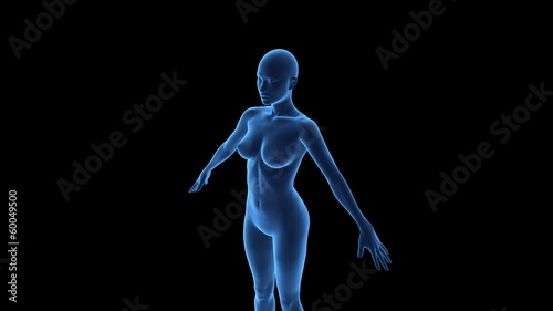 Wireframe scan over female anatomy