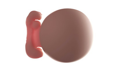 Loopable fetus rotation animation - week 5