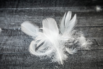 White Down Feathers