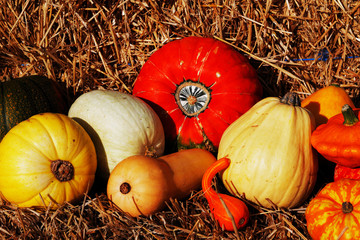 A composition of pumpkins and summer and winter squashes