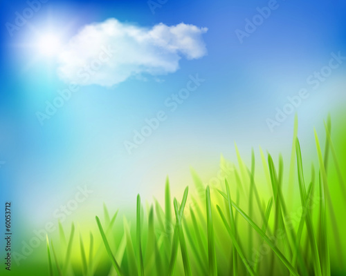 Grass field. Vector illustration.