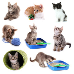Collage of kittens and different stuff for them isolated