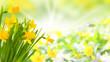 Obrazy na płótnie, fototapety, zdjęcia, fotoobrazy drukowane : Gelbe Blüten im Frühling