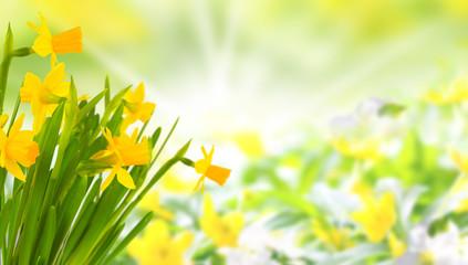 Gelbe Blüten im Frühling