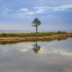 A single tree with sky reflected on the river