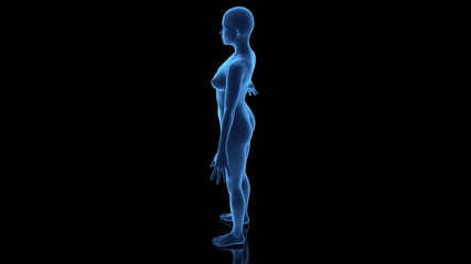 3D female body in loop rotation