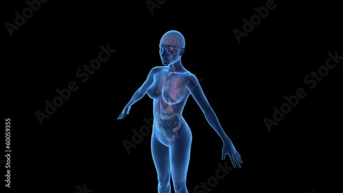 Camera moves closer to female anatomy model