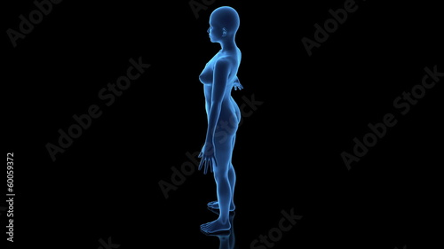 3D female body in loop rotation