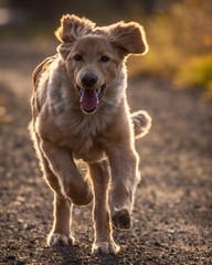 dog action