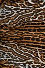 pelliccia di ghepardo reale