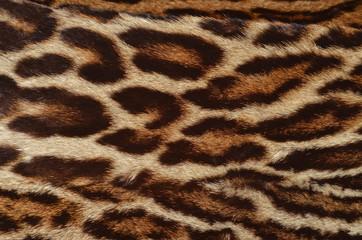 pelle di leopardo dell'Amur