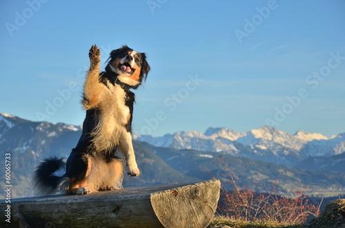 canvas print picture Hund zeigt Pfote zum Gruss