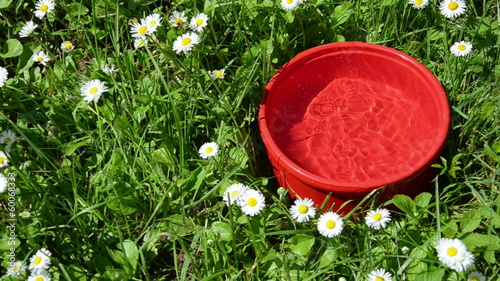 water running into the red dish in the meadow between flowers
