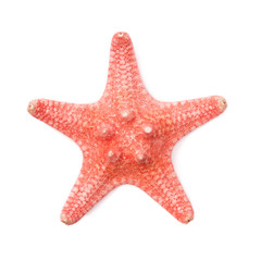 Sea star on white background