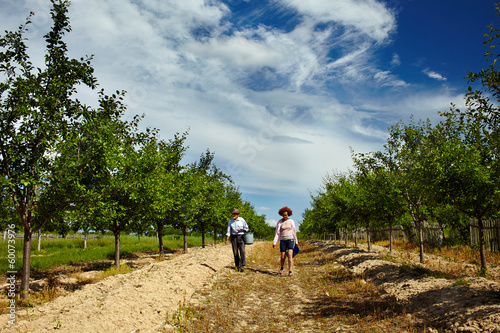 Farmers walking through orchard