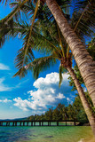 beautiful beach and tropical sea. Palm and tropical beach