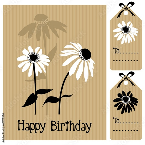 Eechinacea, daisy, vector illustration greeting card