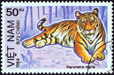 Tiger (Vietnam 1984)