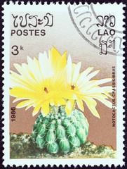 Notocactus crassigibbus (Laos 1986)