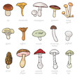 vector set of cartoon illustration -  mushrooms - 60093575