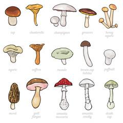 vector set of cartoon illustration -  mushrooms