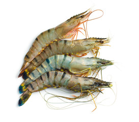 raw tiger shrimps