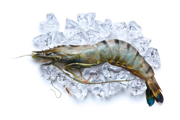 tiger shrimp on ice cubes