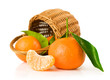 Ripe tangerines with basket