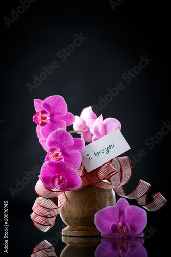 Phalaenopsis line with a declaration of love