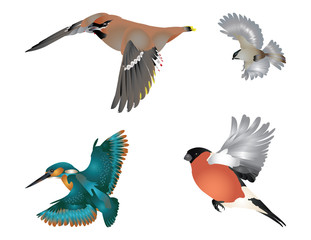 Collection of flying birds