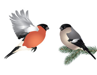 Winter bird romance