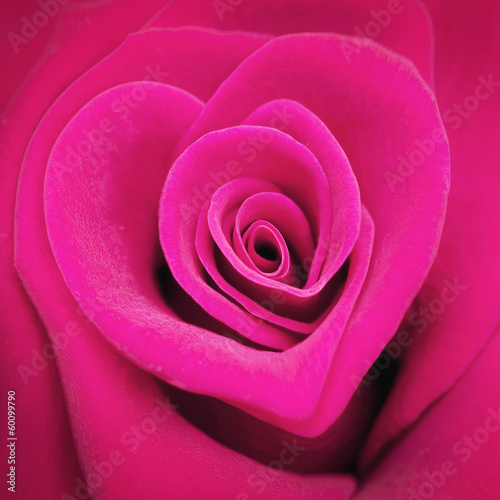 canvas print picture Rose en forme de coeur