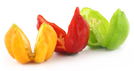Bhut Jolokia chili pepper or the Naga Morich