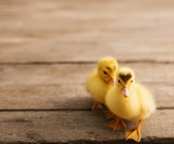 Duckling on wooden background