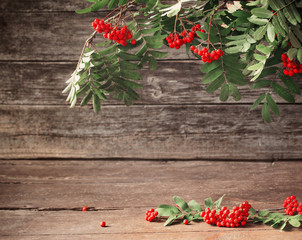ashberry on wooden background