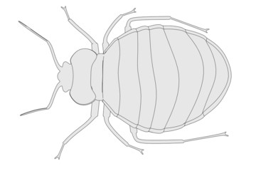 cartoon image of bed bug