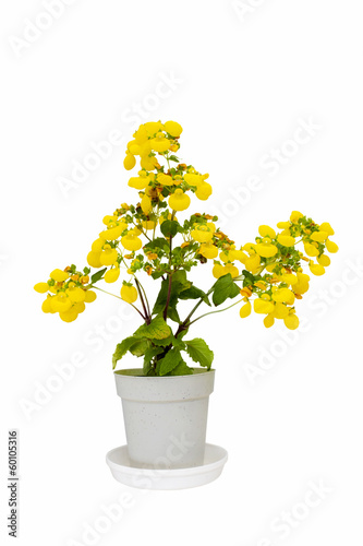 yellow flower in a clay pot