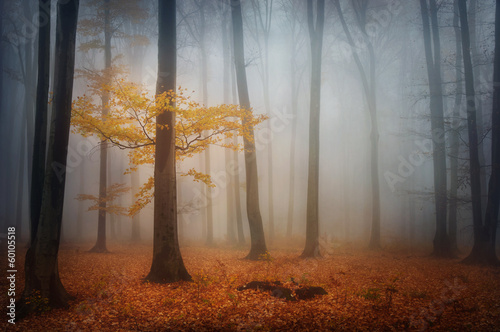 Mystic tree in the foggy forest