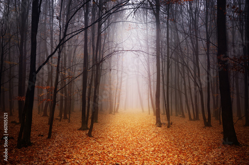 Poster Landschappen Foggy forest