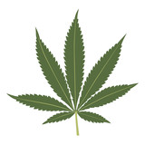 Cannabis leaf vector illustration isolated on white background.